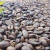 Tribal Coffee Arabica Beans